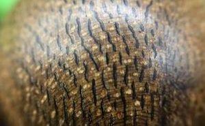 渗出颗粒状黑色油脂的沉香就好吗?